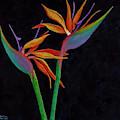 Bird Of Paradise 2 by Darice Machel McGuire