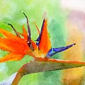 Bird Of Paradise by Susan Rydberg