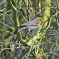 Bird On A Branch by Chance Kafka