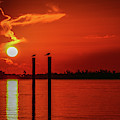 Bird On A Pole Sunrise by Tom Claud