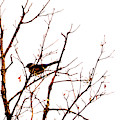 Bird On A Tree by Patricia Awapara