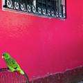 Bird On Cage by Dora Berger