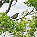 Bird Resting On Branch by Jo-anne Raskin