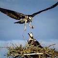 Birding Instinct by Karen Wiles