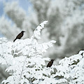 Birds In Infrared by Brian Hale