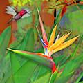 Birds Of Paradise, Green by David Arrigoni