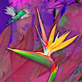 Birds Of Paradise, Magenta by David Arrigoni