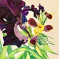 Black And Bumblebee Iris by Laurel Adams