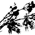 Black And White Abstract Of Desert Milkweed by Colleen Cornelius