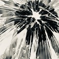 Black And White Dandelion Photograph 4 by Itsonlythemoon