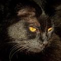 Black Cat by Jean Noren