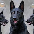 Black German Shepherd Dog Collage by Sandy Keeton