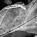 Black Leaf by James L Bartlett