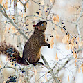 Black Squirrel Eating Berries In Winter by Peggy Collins