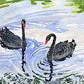 Black Swans - Soulmate by Melly Terpening