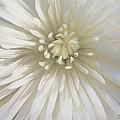 Bloom by Cindy Greenstein