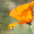Bloom Where You Are Planted By Tl Wilson Photography by Teresa Wilson