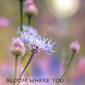 Bloom Where You Are Planted  by Harriet Feagin