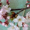 Blossoms by Naomi Ibuki
