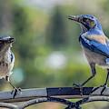 Blu And Blu2 by Dawn Hough Sebaugh