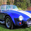 Blue 427 Shelby Cobra In The Garden by David King