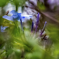 Blue And Green 2 by Keith Greenfield