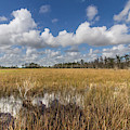 Blue And White Over The Marsh by Debra and Dave Vanderlaan