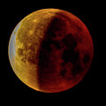Eclipsed Blue Blood Moon by Jack Peterson
