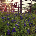 Blue Bonnet Gateway by Amanda Smith