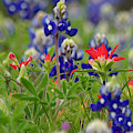 Blue Bonnets And A Paintbrush by Amanda Smith