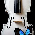 Blue Butterfly On White Violin by Garry Gay