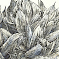 Blue Flame Agave by Judith Kunzle