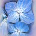 Blue Hydrangea by MM Anderson