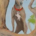 Blue Lacey Dog by Daniel Adams