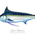Blue Marlin by Charles Harden