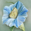 Blue Morning Glory With Yellow Butterfly by MM Anderson