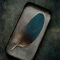 Blue Parrot Feather by Jaroslaw Blaminsky