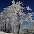 Blue Skies In Winter by Lois Bryan