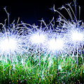 Blue Sparklers In The Grass by Scott Lyons