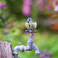 Blue Tit On An Old Garden Tap by Tim Gainey