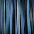 Blue Trees 1 by Peter OReilly