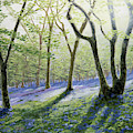 Bluebell Wood by Raymond Ore