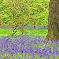 Bluebells And Blossom In Spring by Martyn Arnold
