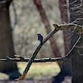 Bluebird, Bluebird, Sing To Me by Karen Adams