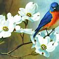 Bluebird In The Dogwood by D Hackett
