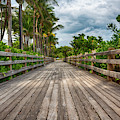 Boardwalk In Miami Beach by Alison Frank