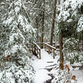 Boardwalk Snow by Karin Pinkham