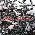 Happy Christmas 12 by Patrick J Murphy