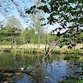 Bogesundlandets Naturreservat by Chani Demuijlder