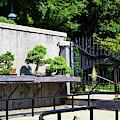 Bonsai Garden by Jill Lang